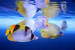 钓鱼热带 免版税图库摄影