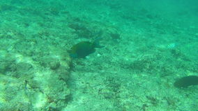 钓鱼热带 股票视频