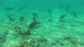钓鱼热带 股票录像