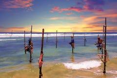 钓鱼用传统方式的地方人 日落的传统渔夫在加勒附近在斯里兰卡 库存照片