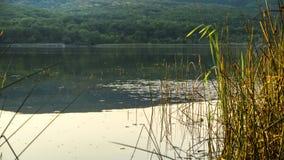 钓鱼的合适场所一个秘密湖的 图库摄影