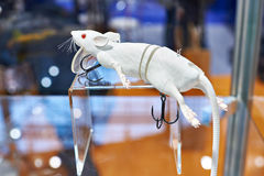 钓鱼的白色老鼠诱剂 免版税库存照片