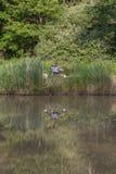 钓鱼竿,在湖的浮游物,上色了与一个地方的背景题字的 免版税库存照片