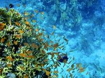 钓鱼红海 免版税库存图片