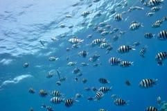 钓鱼红海 库存照片