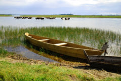 钓鱼老木的小船 免版税库存图片
