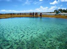 钓鱼自然池海运 库存照片
