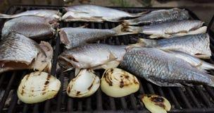 钓鱼蔬菜 免版税图库摄影