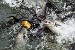 钓鱼许多 免版税图库摄影