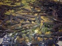 钓鱼许多 库存图片