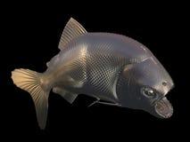 钓鱼金子 免版税库存图片