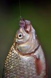 钓鱼钩和诱饵 库存照片