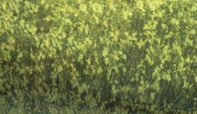 钓鱼银色鲤鱼鱼鳞皮肤伪装背景  图库摄影