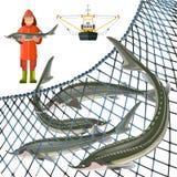 钓鱼集合的鲟鱼 库存例证