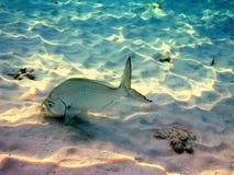 钓鱼马尔代夫 免版税库存照片