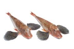钓鱼鲂鱼红色木盆 免版税库存照片