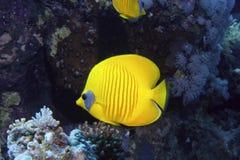 钓鱼黄色 免版税库存图片