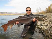 钓鱼-钓鱼在蒙古的taimen 库存照片