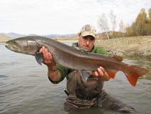 钓鱼-钓鱼在蒙古的taimen 免版税库存图片