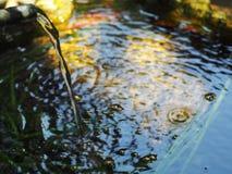 钓鱼从顶视图的碗与从落表面上的被过滤的水的波纹 免版税库存照片