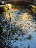 钓鱼从顶视图的碗与从落表面上的被过滤的水的波纹 免版税图库摄影