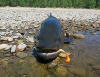 钓鱼- taimen鱼 库存图片
