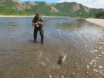 钓鱼- taimen鱼 免版税图库摄影