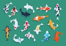 钓鱼koi 日本五颜六色的鲤鱼,亚洲金鱼导航集合 皇族释放例证