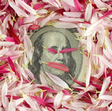 钞票美元一百一 库存图片