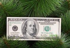 钞票美元绿色杉木 库存图片