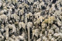 钟乳石墙壁在布拉格,捷克 免版税图库摄影
