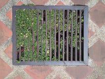 钢刺耳排水设备街道下水道有停止一个小树的登山人水流量 库存图片