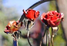 钢玫瑰 库存图片