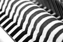 钢琴锤子 免版税图库摄影