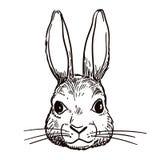 钢笔画的兔子头剪影 库存照片