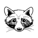 钢笔画的浣熊头剪影 免版税库存照片