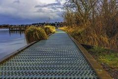 钢走道通过沼泽 免版税图库摄影