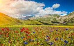 钢琴重创的夏天风景,翁布里亚,意大利 免版税库存照片