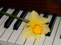 钢琴锁上水仙音乐 免版税图库摄影