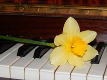 钢琴锁上水仙音乐 库存照片