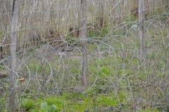 铁丝网作为葡萄园篱芭 库存照片