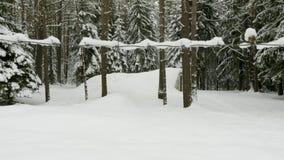 铁丝网围拢的小军事老地堡在冬天森林里 股票视频
