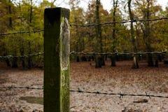铁丝网篱芭在森林里 免版税图库摄影