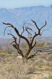 铁木树结构树 免版税库存照片