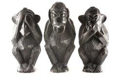 从铁树的猴子 免版税库存图片