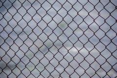 铁格子的照片 梭子鱼 库存照片