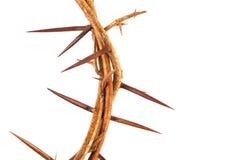 铁海棠在棕色大理石背景的 免版税库存照片