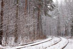 铁路在森林里 库存照片