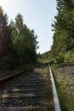 铁路在森林里 库存图片