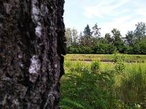 铁路在森林 从桦树的看法 暗中侦察在一列通过的火车 在城市之外的自然绿叶,村庄生活在夏天 库存照片